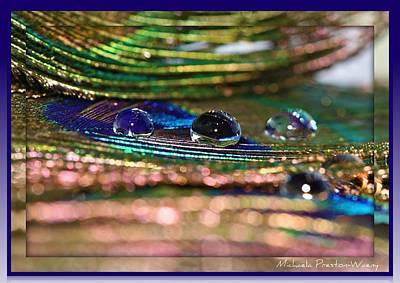 Photograph - Peacock by Michaela Preston