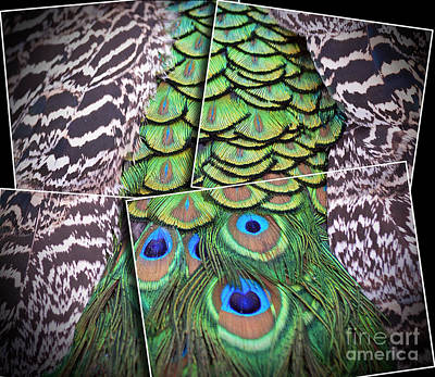 Digital Art - Peacock Plumage Altered Version  by Jim Fitzpatrick