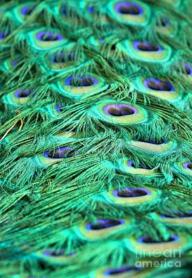 Photograph - Peacock Plumage Designs by Adam Jewell
