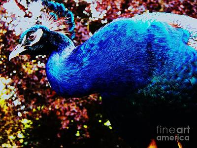 Photograph - Peacock Profile by Vanessa Palomino