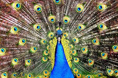 Peacock Photograph - Peacock by Rose Santuci-Sofranko