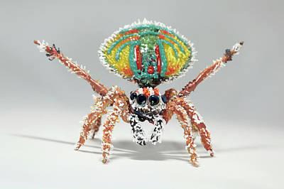 Handcrafted Photograph - Peacock Spider by Tomasz Litwin