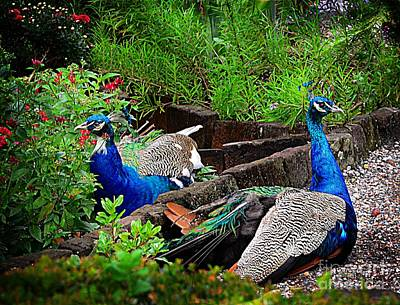 Peacocks In The Garden Art Print by Kathleen Struckle