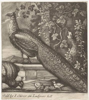 Grape Vines Drawing - Peacocks, Jan Griffier I, John Oliver by Jan Griffier (i) And John Oliver