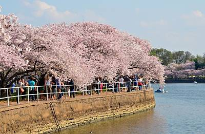 Photograph - Peak Cherry Blossoms On The Basin by Jeff at JSJ Photography