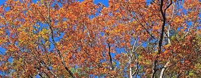 Photograph - Peak Color Of Autumn by Michael Saunders