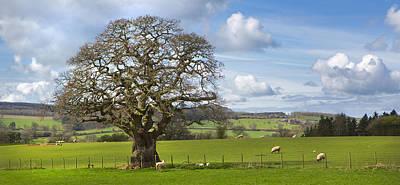 Peak District Tree Art Print