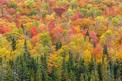 Photograph - Peak Fall Colors In The Forest by Pierre Leclerc Photography