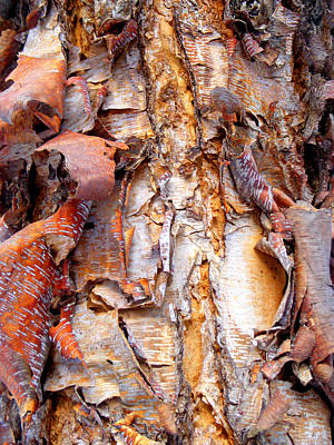 Photograph - Pealing Bark Upclose by Duane McCullough