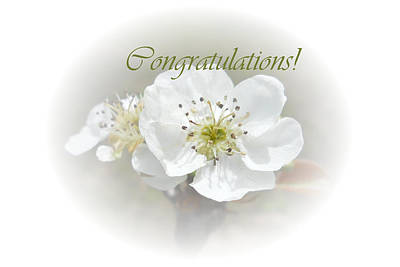 Photograph - Pear Blossom Congratulations by Judy Hall-Folde