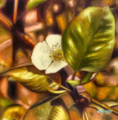Pear Blossom Art Print