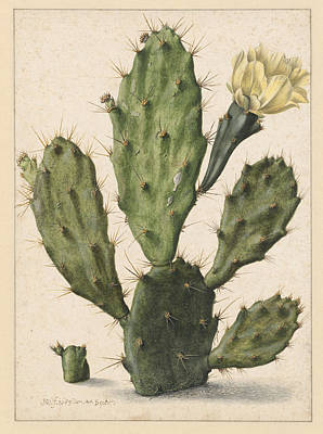 Pear Drawing - Pear Cactus In Bloom, Herman Saftleven by Quint Lox