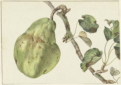 Pear Drawing - Pear On A Branch, Pieter Gevers by Quint Lox