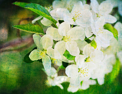 Photograph - Pear Tree Blossoms Vintage Texture by Marianne Campolongo