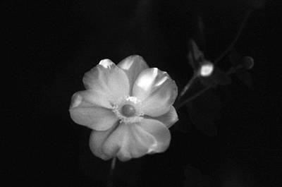 Photograph - Pearl Bush - Snow Day Surprise - Infrared by Pamela Critchlow