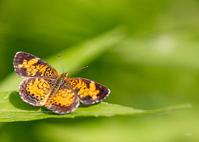 Notecards Photograph - Pearl Crescent Notecard by Everet Regal
