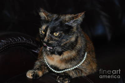 Photograph - Pearl With Pearls. Portrait Of Cat With Pearls by Oksana Semenchenko