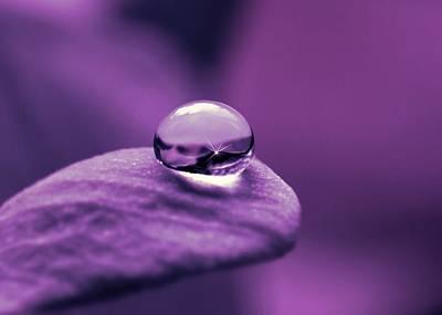 Violett Photograph - Pearls by Gabi Siebenhuehner