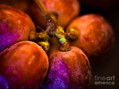 Still Life Photograph - Pearly Grapes by Patricia Bainter