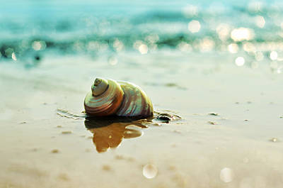 Photograph - Pearly Shell by Laura Fasulo