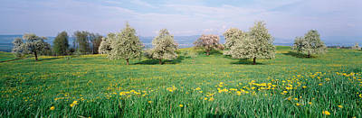 Switzerland Photograph - Peartrees Fields Aargau Switzerland by Panoramic Images