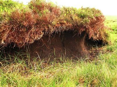 Bog Wall Art - Photograph - Peat Bog by Cordelia Molloy