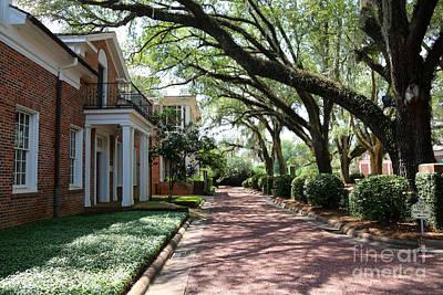 Georgia Plantation Photograph - Pebble Hill Plantation Walkway by Carol Groenen