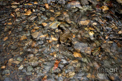 Photograph - Pebblebrook 2 by Michael Waters