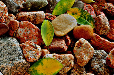Pebbles And Leaves Art Print