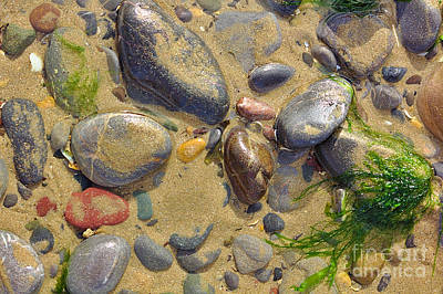 Photograph - Pebbles On The Beach by Jeremy Hayden