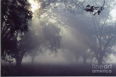 Pecan Grove On A May Morning Art Print by Debbie Bailey