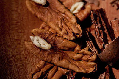 Katharine Hepburn - Pecans Ready to Eat by Wilma  Birdwell