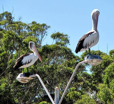 Photograph - Pecking Order by Paul Svensen