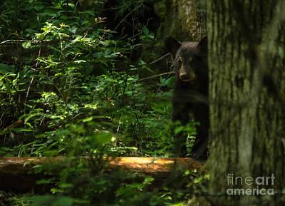 Photograph - Peek A Boo Bear by Cheryl Baxter