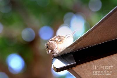 Photograph - Peek A Boo Bird by Audreen Gieger