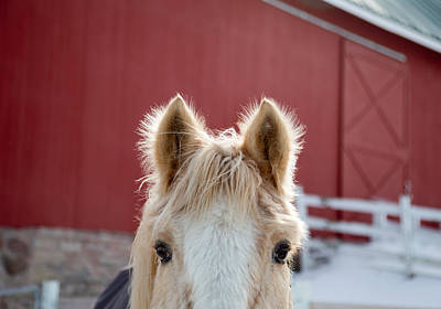 Horse Eye Photograph - Peek A Boo by Courtney Webster