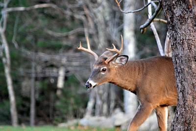 Peek-a-boo Deer Original by Lena Hatch