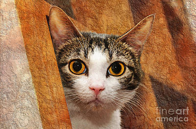 Cat Photograph - Peek A Boo I See You by Andee Design