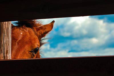 Horse Ears Photograph - Peek A Boo  by John McGraw