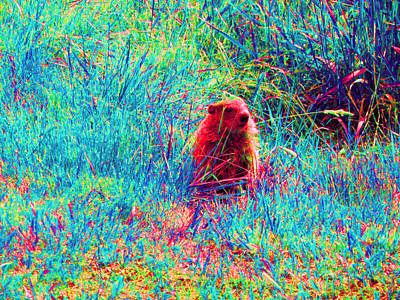Groundhog Digital Art - Peek-a-boo by Joseph Wiegand