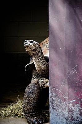 Soap Suds - Peek-A-Boo Tortoise  by Swift Family