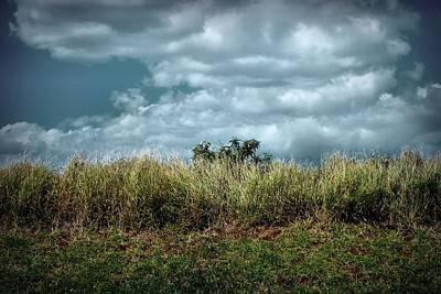 Photograph - Peek-a-boo Tree by Patricia Strand