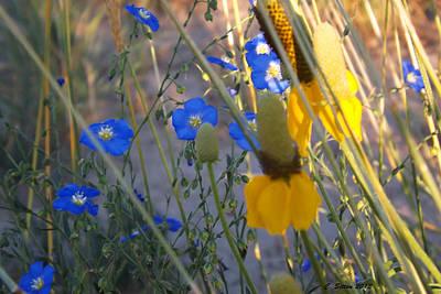 Photograph - Peeka Blue by C Sitton