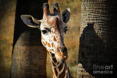 Bath Time Rights Managed Images - Peekaboo Giraffe Royalty-Free Image by Mariola Bitner