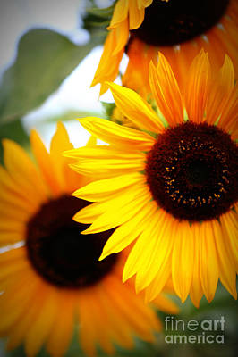 Photograph - Peekaboo Sunflowers by Carol Groenen