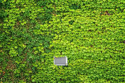 Photograph - Peeking Through Ivy On The High Line by Gary Slawsky