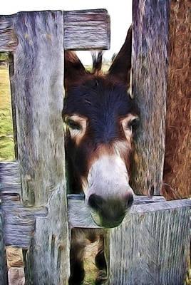 Photograph - Peeking Thru The Fence by Athena Mckinzie