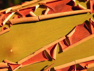 Photograph - Peeling Bark by Cheryl Hoyle