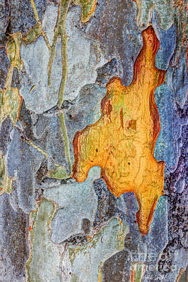 Photograph - Peeling Bark Elm Abstract by Heidi Smith