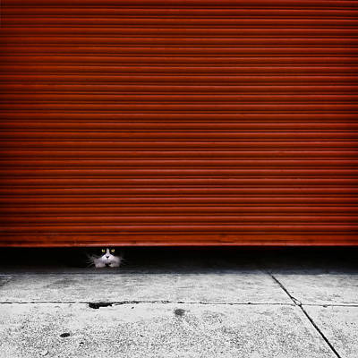 Hiding Photograph - Peeping Tom by Wolf Shadow  Photography